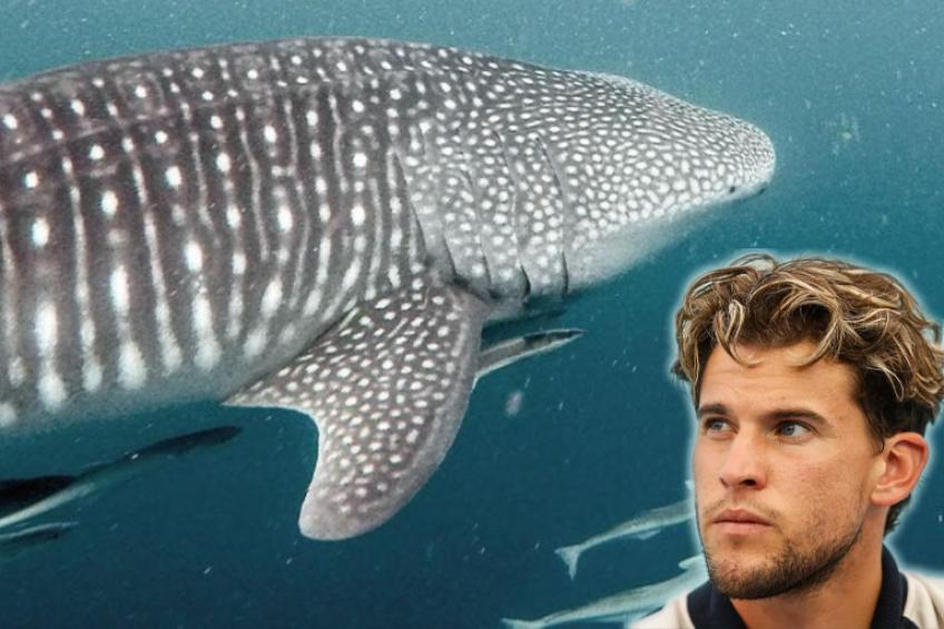 """US Open champ Thiem stands by creatures """"from Avatar"""", the whale sharks"""