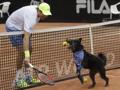 Six dogs served as ball boys on the Central Court of ATP 250 Sao Paulo!