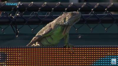 Iguana Runs On Court, Halts Match At The Miami Open