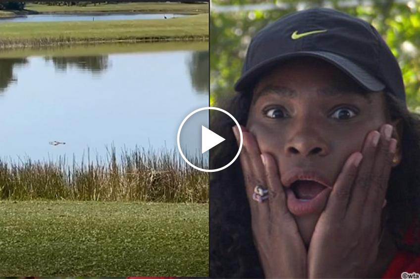Serena Williams gets scared by a gator: 'Lord, have mercy! I'm out of here'